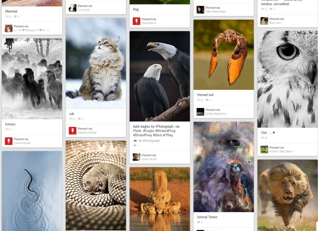 MHG Animal Spirit Pinterest Board