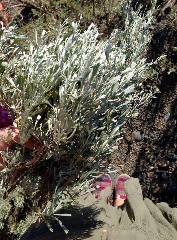 Harvesting Sage with Goddess Artemis by Melanie OLeary on MotherHouse of the Goddess