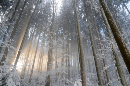 What is the Winter Solstice by Susan Harper for MotherHouse of the Goddess