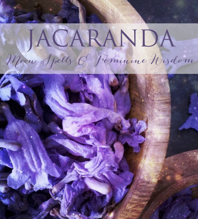 The Wild Witch Jacaranda Renee Starr