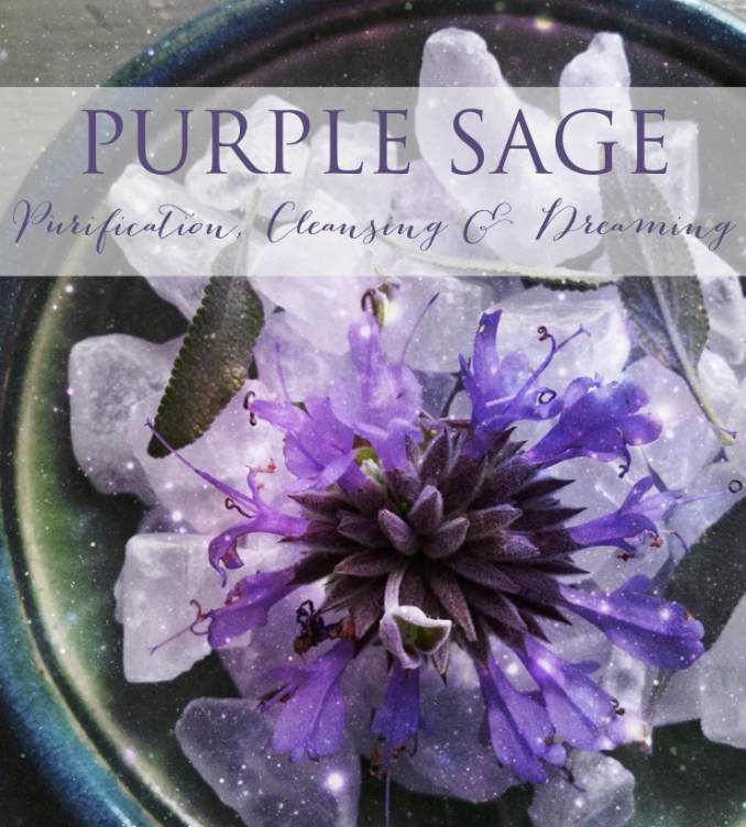 The Wild Witch Purple Sage Renee Starr
