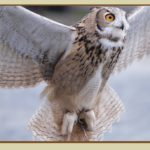 Minerva's Owls by Mary Petiet {Goddess Gift Guide}