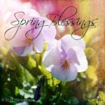 SPRING: the time of becoming by Renee Starr